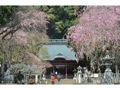 伊豆山神社 春のイメージ