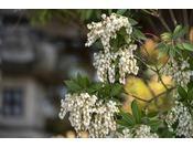 季節によって色とりどりの景色が堪能できるのも宮島の魅力★