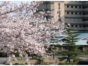 春は当館の敷地内の桜が満開になります。