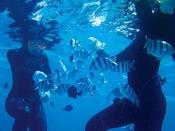 リザンシーパークビーチから出発!神秘的な青の世界が人気スポットの青の洞窟が大人気です!