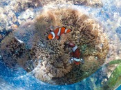 ちびっ子干潟探検:干潟時に遠浅のリザンビーチを探索し、珍しい生物を観察したり自然を体感します。