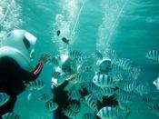エメラルドグリーンの海の中では魚たちとの新しい出会いが待っています。(8歳以上65歳迄※小学生保護者同伴)