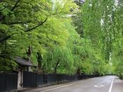 【周辺観光】新緑の角館武家屋敷通り