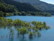 【周辺観光】秋扇湖(鎧畑ダム)の水没林