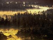【周辺観光】八幡平山頂付付近の湿原