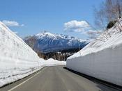 【周辺観光】八幡平アスピーテライン雪の回廊