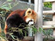 【当ホテルからのアクセス】お車で約10分池田動物園は、県内でも随一の規模を誇る動物園です。チケット付きの宿泊プランもご用意しておりますので、ぜひお子様とご一緒にお楽しみ下さい。