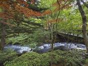 夏の日本庭園/桂橋の袂