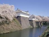 春の霞城公園。桜の名所です。