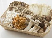 きのこ類は食物繊維が豊富♪ダイエットや美肌づくりに…!