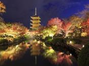 東寺ライトアップ(10月28日~12月10日)