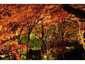 熱海梅園の紅葉は11月中旬から12月初旬が見頃です。当館より車にて約10分