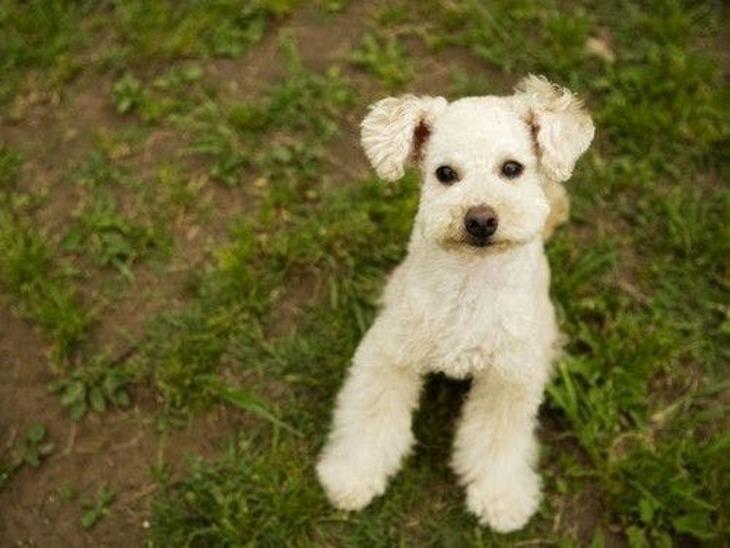 【誰でも最大10%お得】【愛犬と一緒に温泉旅行】ワンちゃんと一緒に自然の中で過ごす休日/ビュッフェ