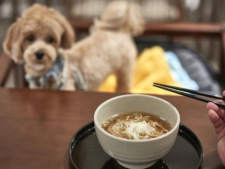 【Tポイント1%】<ペット同伴ルーム>【素泊り】お食事は愛犬とおさんぽ&外食!遅い到着でもOK(小~大型犬まで可)