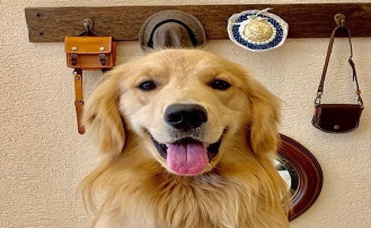 【Tポイント4%】【リゾート14days】<ペット同伴ルーム>最大15%OFF+ポイント最大5倍 小~大型犬までOK