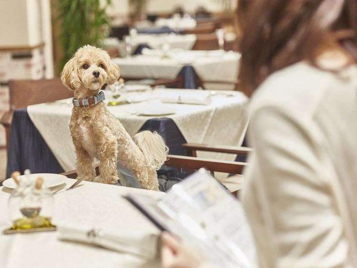 【Tポイント1%】<ペット同伴ルーム>【朝食付き】旧軽井沢で愛犬とお散歩!到着24時でもOK※小~大型犬まで可