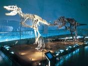 【恐竜博物館】恐竜王国ふくいを象徴する福井県恐竜博物館