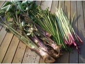 山菜採りツアー。採る楽しみ、食べる楽しみ