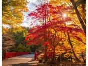 【公園】秋の公園を散策しているとみえてくる風鈴橋。