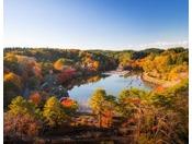 【公園】紅葉に彩られる公園