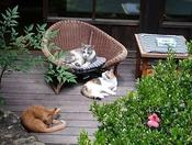 くつろげる中庭でひなたぼっこ。