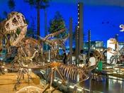 【周辺・景観】福井県立恐竜博物館(当館よりお車で約60分)