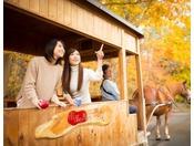 【公園めぐり馬車(秋)】りんごの色のように赤や黄色に色づく紅葉をお楽しみください