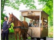 【公園めぐり馬車(夏)】子供から大人まで大人気!広い公園を馬車で散策