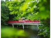【公園めぐり馬車】池にかかる赤い橋「風鈴橋」を渡っていきます