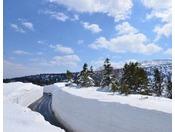 【八甲田 雪の回廊】春先の時期にしか見ることができない春の八甲田の名所です。