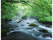 【奥入瀬渓流】日本屈指の景勝地、奥入瀬渓流(車で約60分)