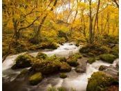 【奥入瀬渓流】車で約60分。黄葉の阿修羅の流れ
