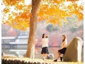 【散策】公園散策ではたくさんの秋を発見。どんぐりや栗、そして桂の甘い香りも漂ってきます。