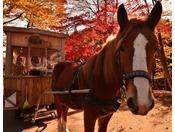 【公園めぐり馬車(秋)】秋は紅葉とりんごを楽しみながら公園を散策