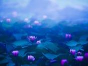ホテル前の池には6月初旬になると睡蓮の花が咲きます。朝靄に包まれた姿は幻想的です。
