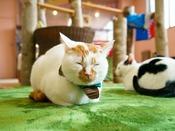 盛岡にある猫カフェ、ハンドメイド作品等の展示販売や里親探しも。『猫カフェもりねこ』へは約110km。
