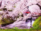 春には2,600本の桜が咲く名所、青森『弘前城公園』へは約235km。2015年4月24日撮影