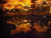 『円通院』へは約249km。石庭の木々は美しい紅葉に彩られます。2013年11月18日撮影