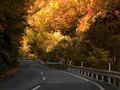 県立自然公園『早坂高原』高地性植物の宝庫で絶好のドライブコースです。2012年10月27日撮影[グリーンピア三陸みやこより67.0km]