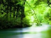 景勝地『奥入瀬渓流』へは約190km。豊かな樹木に千変万化の渓流、四季折々の自然美を堪能できます。