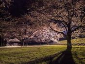 約200本のソメイヨシノの桜並木。『雫石川園地』へは約128km。2014年5月6日撮影