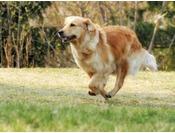 愛犬と一緒に寛げる【KaZeDoG】海辺の宿にワンちゃんとお泊り♪