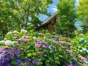 【初夏を彩る紫陽花】敷地内にて涼しげに咲くあじさいが、初夏の舞洲を彩ります。