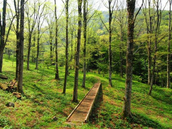マイナスイオン溢れる「ケヤキの森」当館より徒歩10秒
