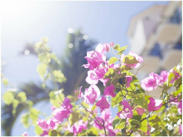 ブーゲンビレアも咲くガーデン