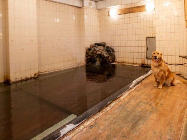 ワンちゃんたちの温泉は安全・快適な入浴を考慮した段差付き!もちろん湯畑源泉100%!
