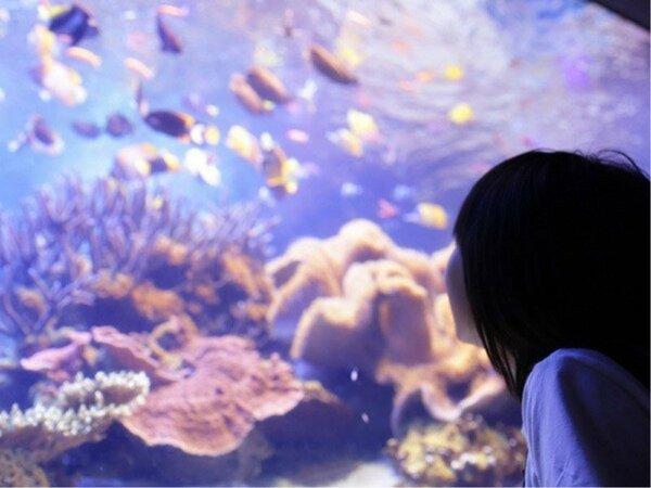 【鳥羽水族館】水槽の中に広がる海の世界!カラフルな海の生き物が楽しめます♪※画像はイメージです。