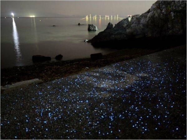 海ホタルの青紫の光はとても幻想的♪