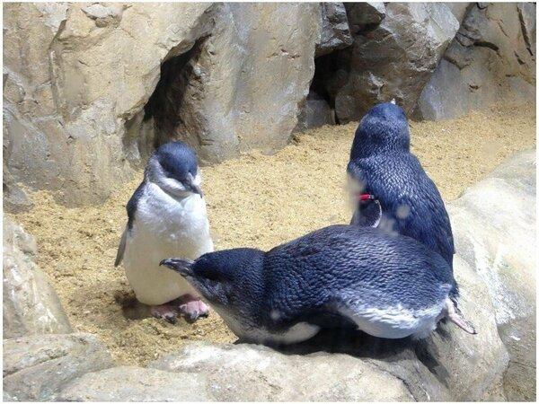 【仙台うみの杜水族館】ペンギンと一緒に記念撮影ができるフォトコーナーもあります!