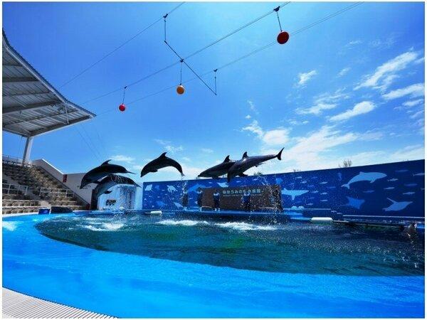 【仙台うみの杜水族館】イルカ・アシカのパフォーマンスは1日3-7回開催、1回約20分間